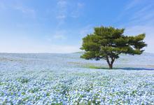 日本樱花看腻了,蓝色海洋了解一下?